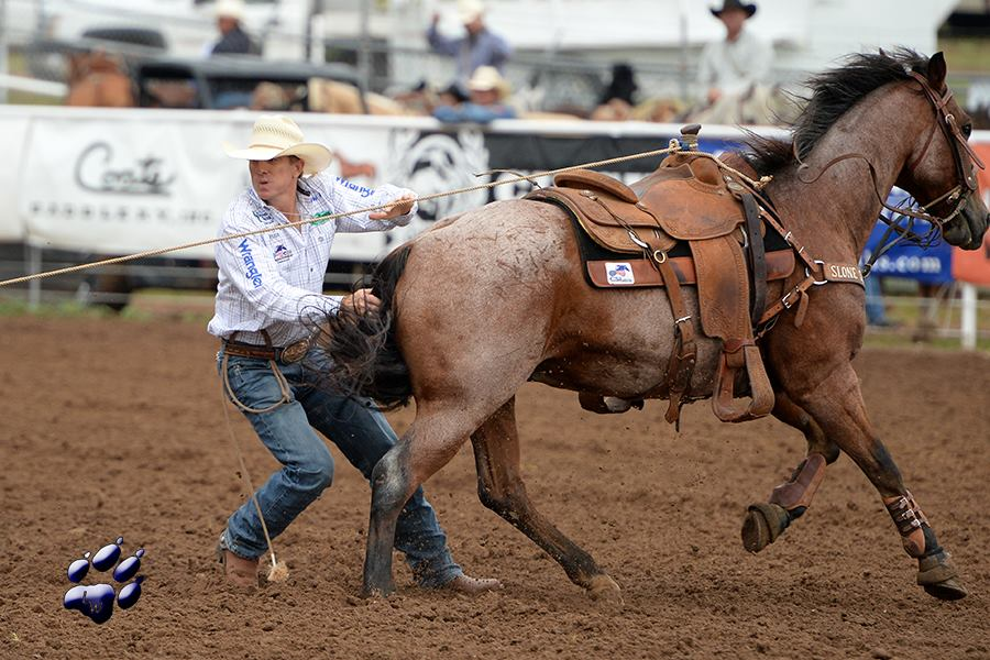 Scott Snedecor | CSI Saddle Pads are ridden by top Rodeo Athletes